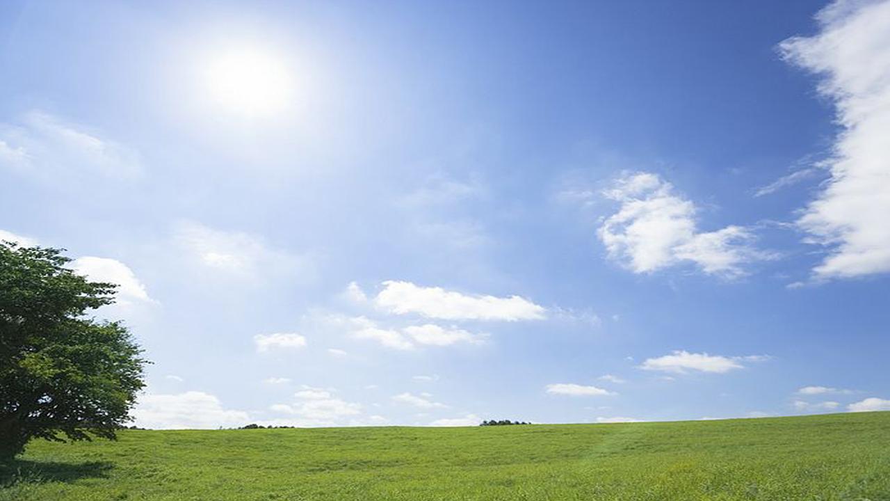 green-grassland
